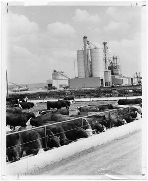 Primary view of object titled 'Cattle Feedyard'.