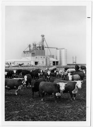 Primary view of object titled 'Cattle Feedlot'.