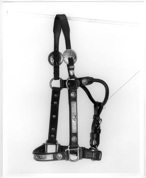 Primary view of object titled 'Bridle with Silver Buckles'.