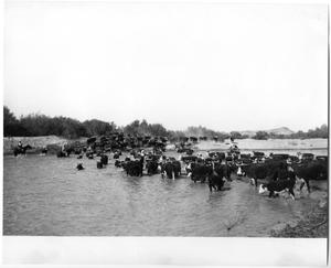 Primary view of object titled 'Cattle Crossing a River'.