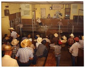 Primary view of object titled '[Cattle in auction pen]'.