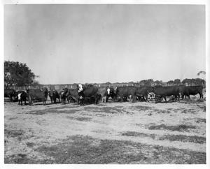 Primary view of object titled '[Cattle on a farm]'.