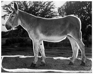 Primary view of object titled '[Donkey in landscape]'.