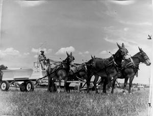 Primary view of object titled '[Four-mule hitch]'.