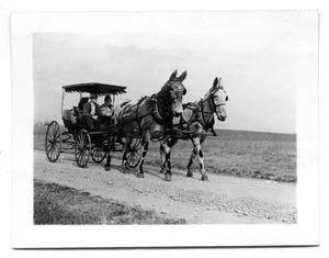 Primary view of object titled '[Three people in Appaloosa Mule-driven carriage]'.