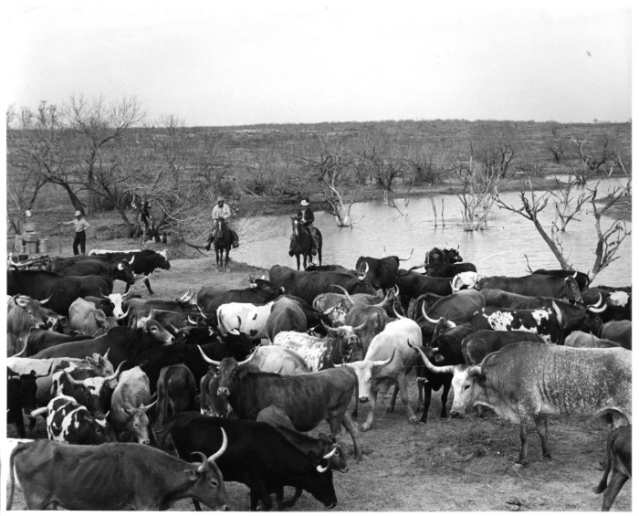 Photograph of a field with a group of cattle and men on horseback near a small pond.