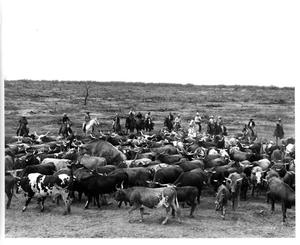Primary view of object titled '[Cattle bunching]'.