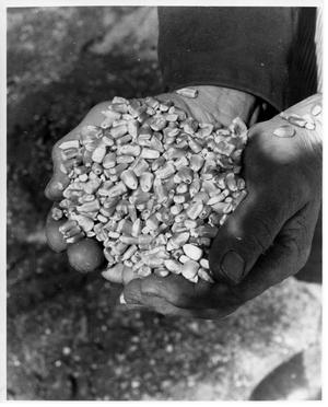 Primary view of object titled '[Handful of corn]'.