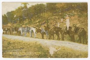 Primary view of object titled '[Postcard of Burros on the Trail]'.