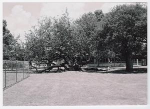 Primary view of object titled '[Rockport School Photograph #15]'.
