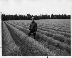 Primary view of object titled '[Photograph of Jacob C. Garrison Standing in Mason Sandhill Lovegrass]'.
