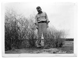 Primary view of object titled '[Photograph of a Man Standing by Switchgrass]'.