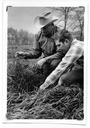 Primary view of object titled '[Photograph of Men in Ryegrass]'.