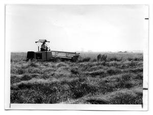 Primary view of object titled '[Photograph of Combine in Kleingrass]'.