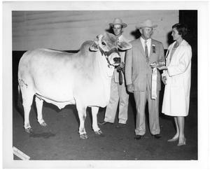 Primary view of object titled 'Reserve Grand Champion Female - National Brahman Show'.