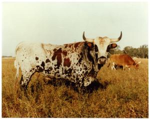Primary view of object titled 'Large Bull in a Field'.