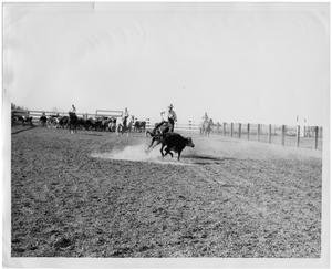 Primary view of object titled 'Steer Turning From a Rider'.