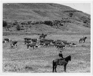 Primary view of object titled 'Grazing Cattle Next to a Hill'.