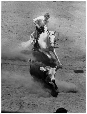 Primary view of object titled 'Cowboy in Steer Wrestling Event'.