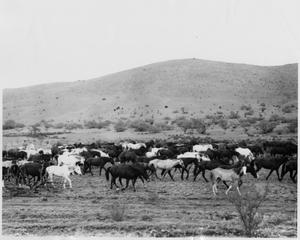 Primary view of object titled 'Herd of Horses on a Plain'.