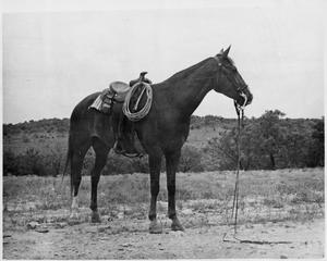 Primary view of object titled 'Jack Farmer's Quarter Horse'.