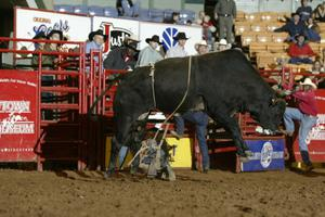 [Bucking Bull at Cowtown Coliseum]