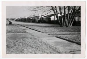 Primary view of object titled '[Photograph of Sidewalks on Marquette Street]'.