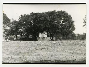 Primary view of object titled '[Kneupper Chapel Photograph #7]'.