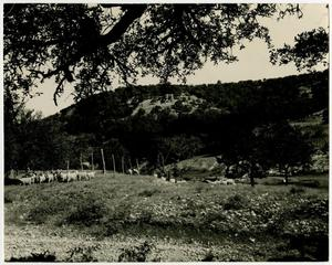 Primary view of object titled 'Sheep Herd in the Hill Country'.
