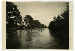 Primary view of object titled 'Institute Swimming Hole in the Guadalupe River'.