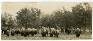 Primary view of object titled 'Buffalo Grazing, 1932'.