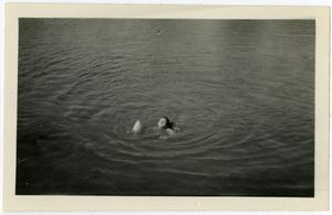 Primary view of object titled 'Evylin Emmerson Swimming in the Guadalupe River'.