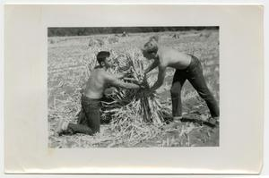 Primary view of object titled 'Agricultural and Animal Husbandry Students and Friends, Two Shirtless Men Harvesting, 1950's'.