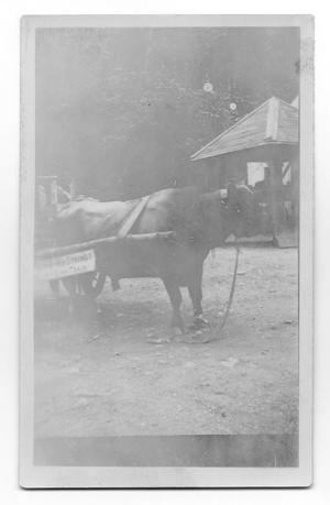 Primary view of object titled 'Ox in Harness'.