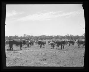 Primary view of object titled 'Herd of Cattle'.