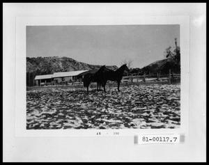 Primary view of object titled 'Horses in the Snow in West Texas'.