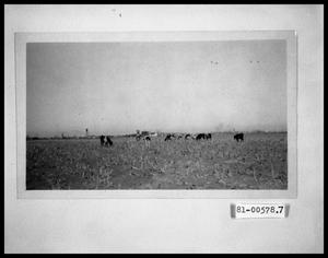 Primary view of object titled 'Cattle in a Field'.