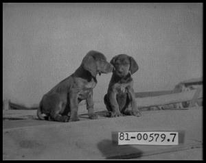 Primary view of object titled 'Two Puppies'.
