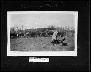 Primary view of object titled 'Branding Cattle'.