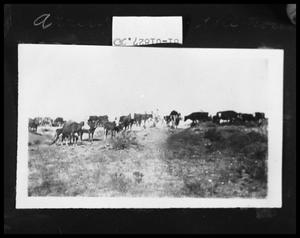 Primary view of object titled 'Cattle Herd'.