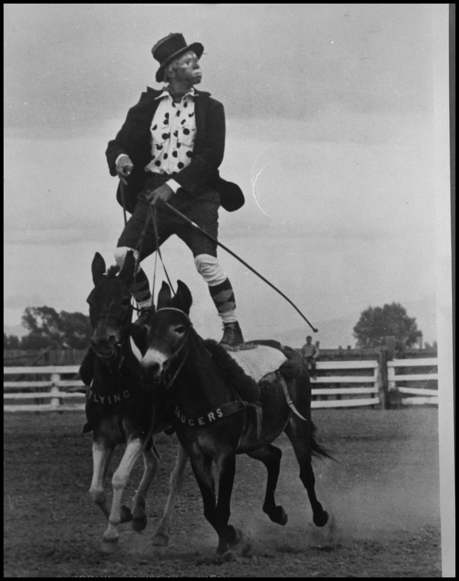 Photograph Of Rodeo Clown Riding Mules The Portal To