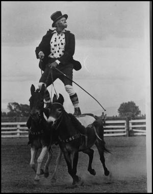 [Photograph of Rodeo Clown Riding Mules]