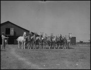 Primary view of object titled '[Photograph of a Man with Horses]'.