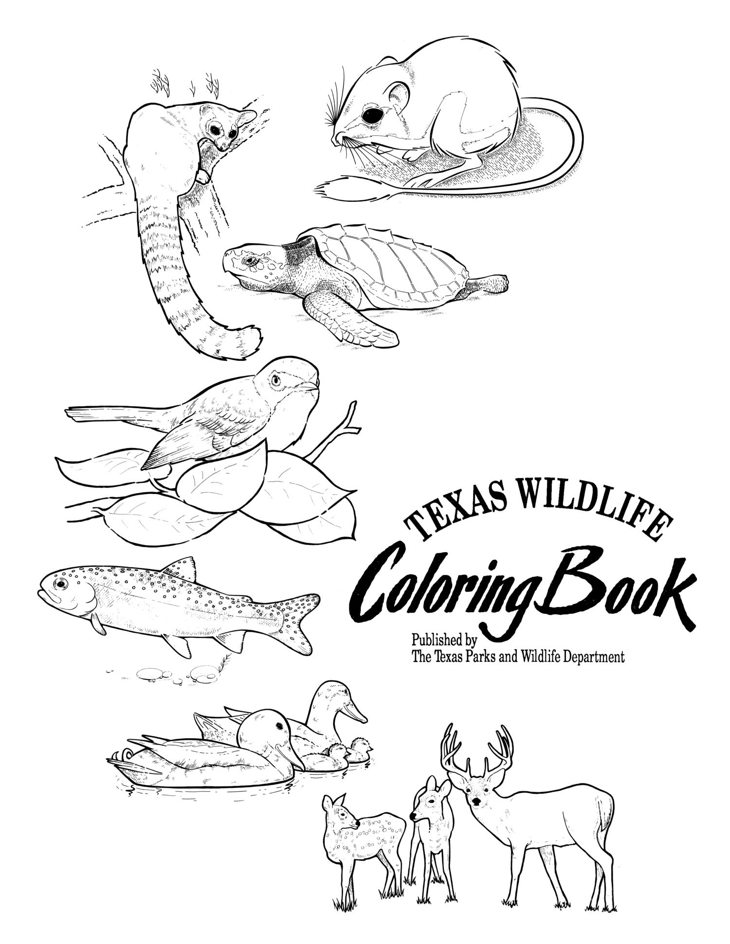 Texas Wildlife Coloring Book - The Portal to Texas History