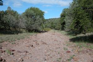 Primary view of object titled 'Photograph of a West Texas wash on the Sproul Ranch: Path and trees]'.