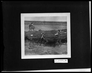 Primary view of object titled 'Cattle Drive'.