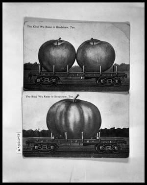Primary view of object titled 'Humor Postcard, Apple; Humor Postcard, Pumpkin'.