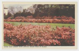 Primary view of object titled '[Postcard of River Oaks Garden Club #2]'.