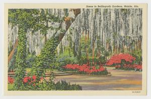 Primary view of object titled '[Postcard of Azaleas In the Shade of a Forest]'.