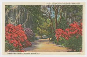 Primary view of object titled '[Postcard of Azaleas and Spanish Moss in the Sunny South]'.